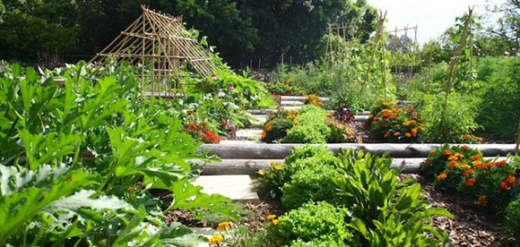 A Place of Tranquillity… The Vegetable Garden