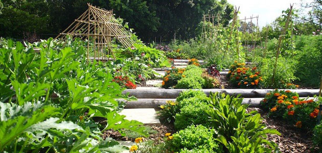 WOW!  What a Vegetable Garden