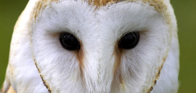 Attracting Owls to Your Garden
