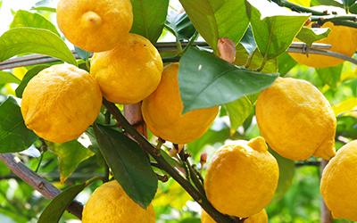 Citrus GardenCare Leaflets