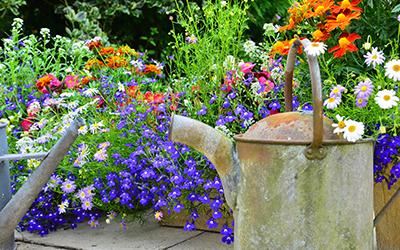 Country_Garden GardenCare Leaflets