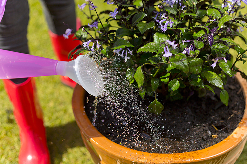 How to plant up a Container