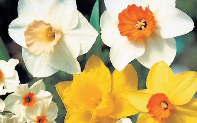 Seedlings | Seeds | Bulbs
