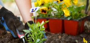 april_header-630x300-1-300x143 Gardening Month by Month