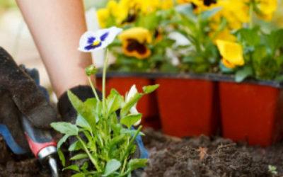 april_header-630x300-1-400x250 Gardening Month by Month