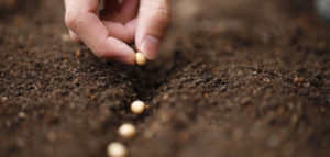 july_header-630x300-300x143 Gardening Month by Month