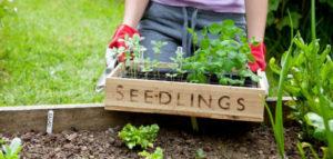 march_header-630x300-300x143 Gardening Month by Month