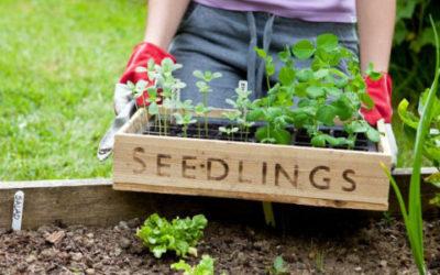 march_header-630x300-400x250 Gardening Month by Month