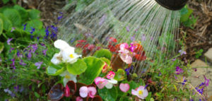 newjanuary_header-630x300-300x143 Gardening Month by Month