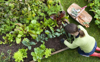 newmay_header-630x300-400x250 Gardening Month by Month