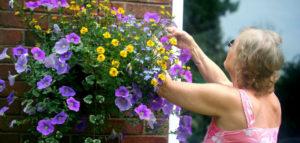 newnov_header-630x300-300x143 Gardening Month by Month