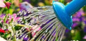 oct_header-630x300-300x143 Gardening Month by Month