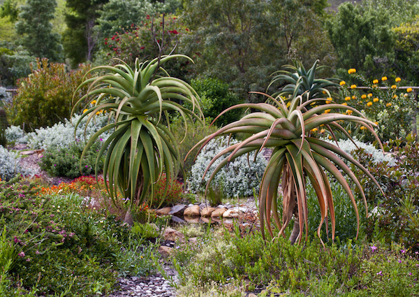 The Art of Xeriscaping