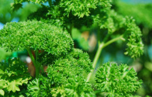3-parsley-copy