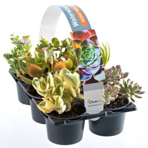 Econo Pack Succulents Variety