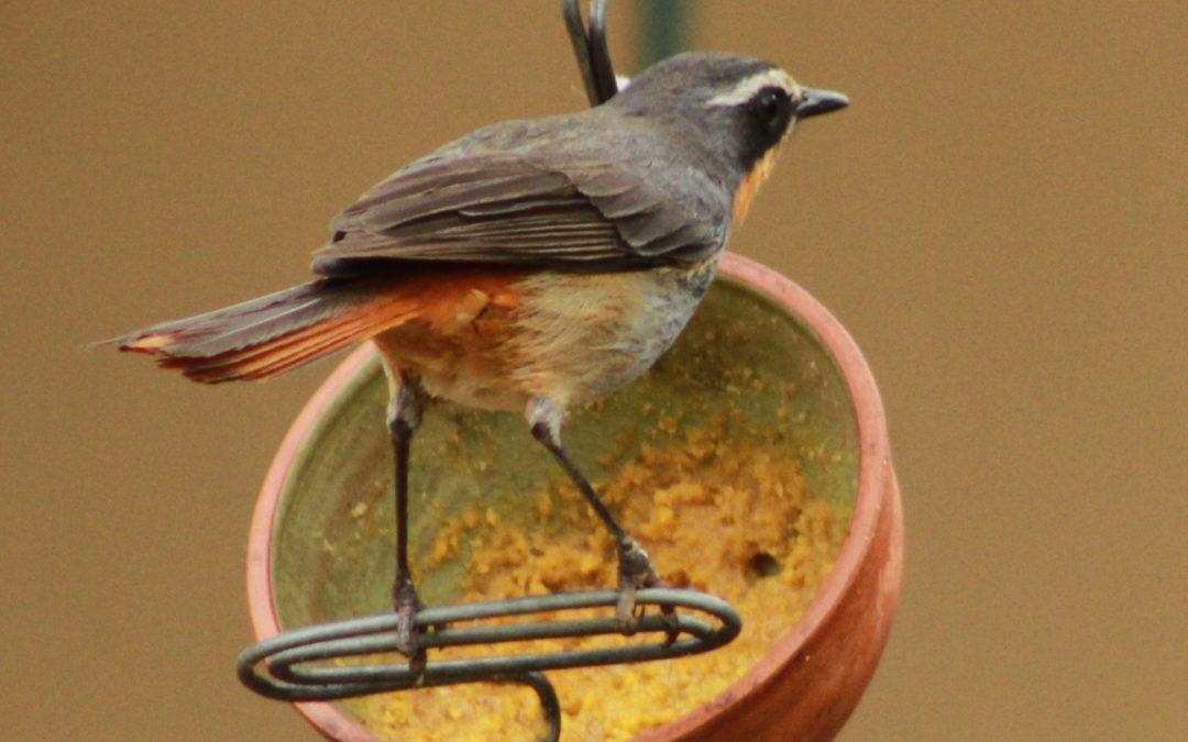 Why do I feed the birds?