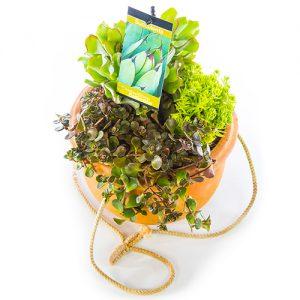 Succulent in Terra Bowl Flat Medium