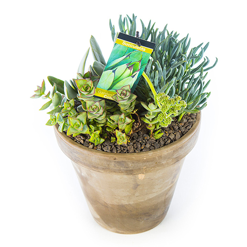 Basalt Flower Pots : Succulent in basalt pot grey large gardenshop