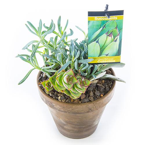 Basalt Flower Pots : Succulent in basalt pot grey small gardenshop