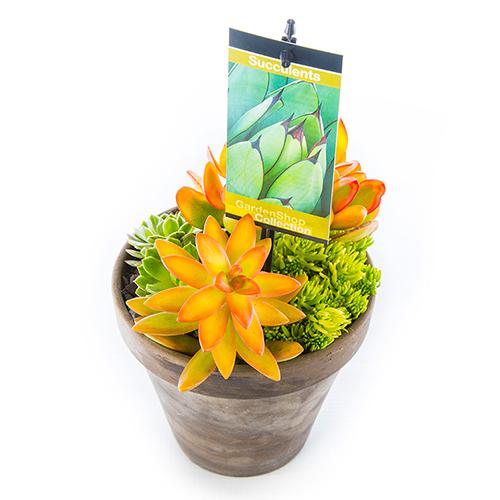Basalt Flower Pots : Succulent in basalt pot yellow small gardenshop