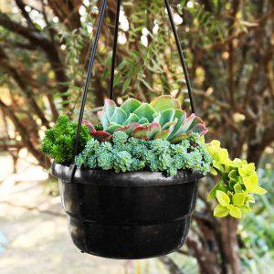 Succulent Plant Hanging Basket
