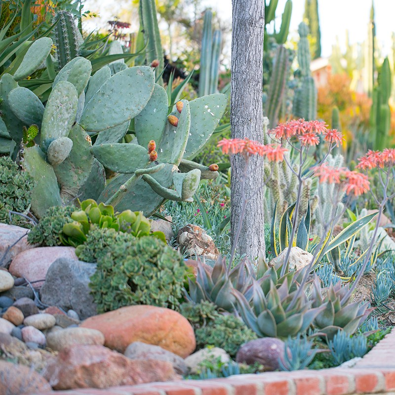 Waterwise_Gallery4 CACTUS & SUCCULENTS