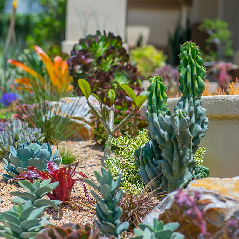 Waterwise_Gallery5 CACTUS & SUCCULENTS