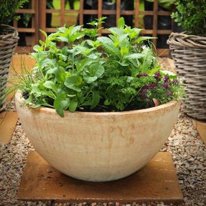 Planted Herb Pot