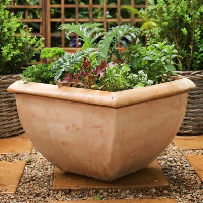 Planted Herb & Veg Pot