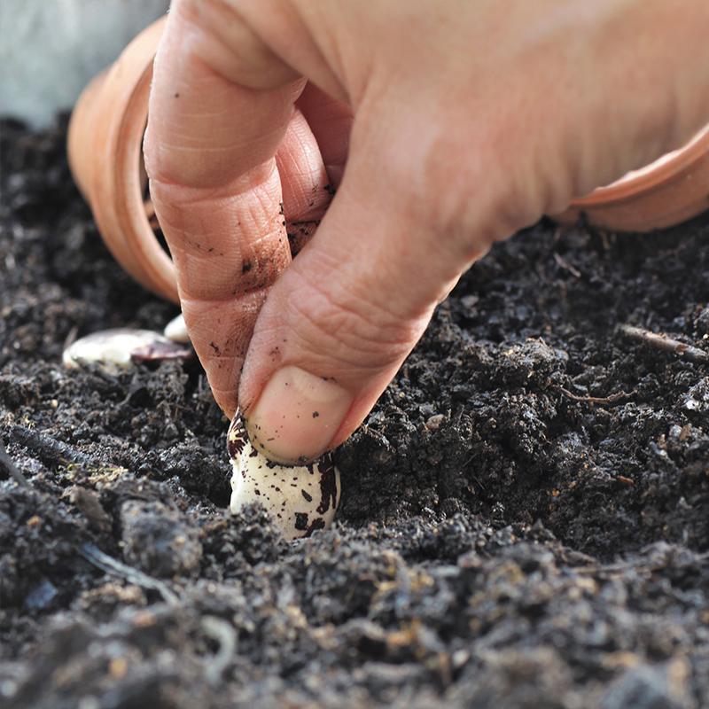 dark-soil-with-hand-planting GARDEN TOOLS & FERTILIZER