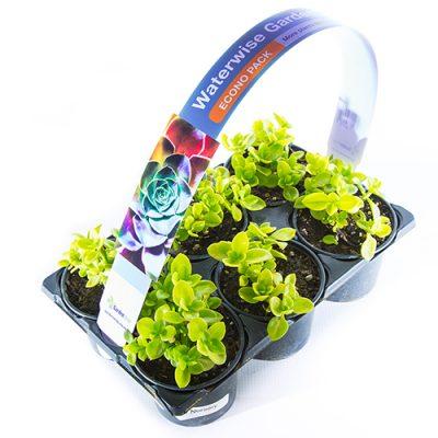 Econo Pack Aptenia cordifolia