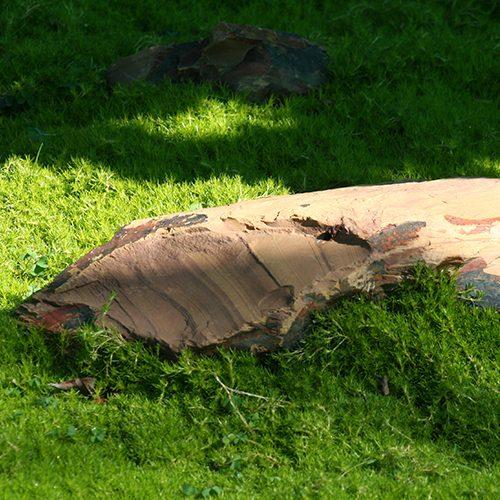 Irish-moss
