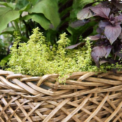 Planted Herb Basket