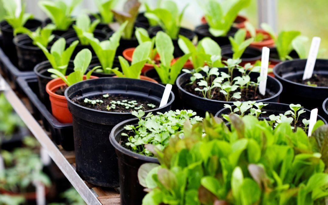 A Feeding Scheme for Organic Vegetable Gardens