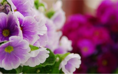 Your-garden-in-autumn-DSC_0040-400x250 Garden Guru Tips and Tricks