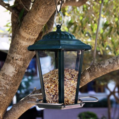 Regular Seed Feeder