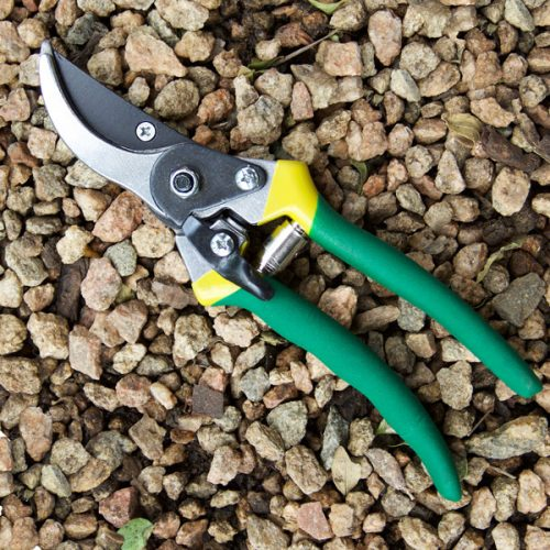 Lasher Pruner