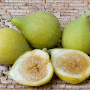 Fig Kadota