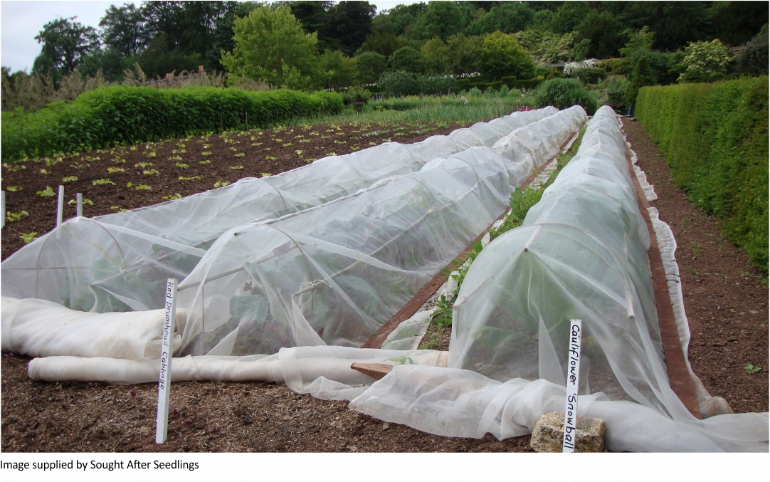 International Trends in  Organic Vegetable Gardening