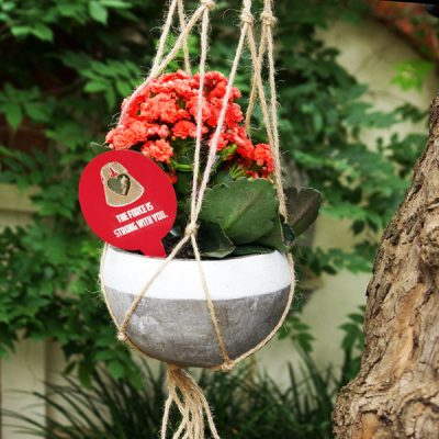 Kalanchoe in Hanging Ceramic pot