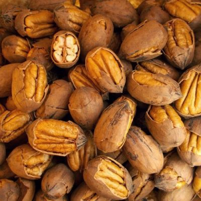 Pecan-nut2-e1528708396781-400x400 Fruit Trees