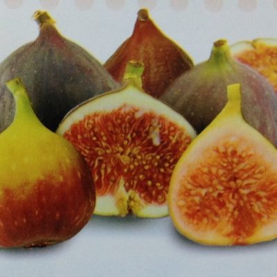 figs--400x400 Fruit Trees