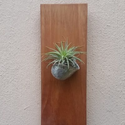 Airplant Holder
