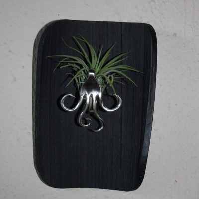Airplant holder IMG_3893