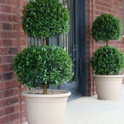 zu49494735_main_tm1500301334-400x400 OUTDOOR PLANTS