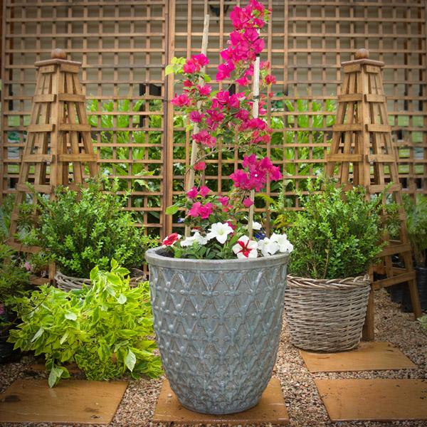 Bougainvillea GardenShop Online Home