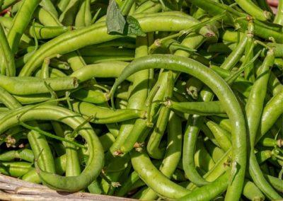 Green-Beans-400x284 Your OctSOWber Garden!