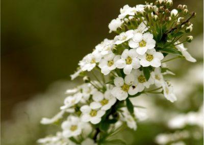 Lobularia-maritima-400x284 Your OctSOWber Garden!
