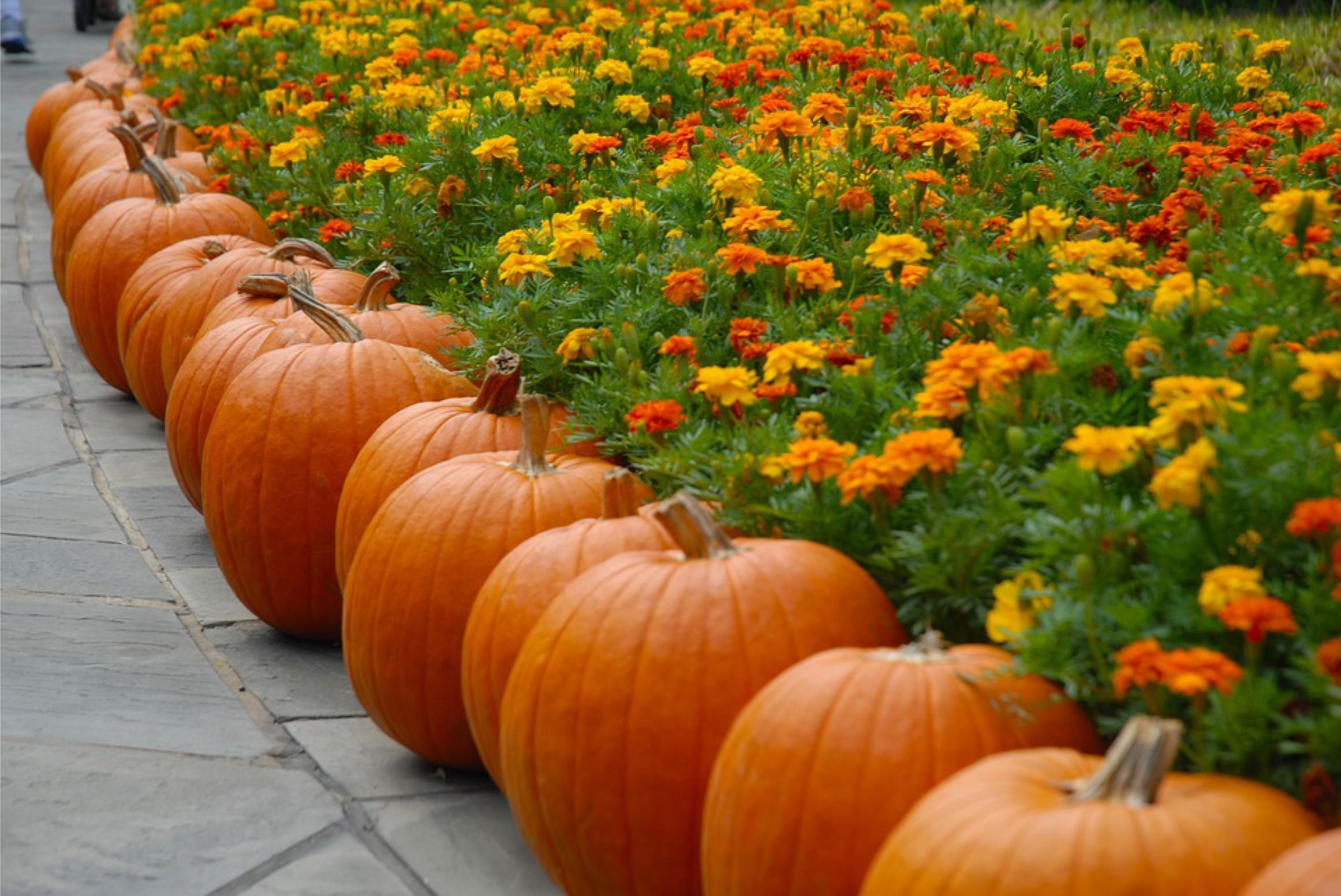 Your OctSOWber Garden!