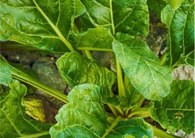 Spinach-400x284 Your OctSOWber Garden!